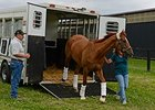 "Wise Dan arrives at Charlie and Amy LoPresti's Forest Lane Farm.<br><a target=""blank"" href=""http://photos.bloodhorse.com/AtTheRaces-1/At-the-Races-2014/i-bbQG897"">Order This Photo</a>"
