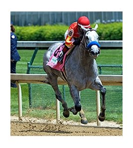 "Midnight Lucky rolls to victory in the Humana Distaff. <br><a target=""blank"" href=""http://photos.bloodhorse.com/AtTheRaces-1/At-the-Races-2014/i-hBL62pR"">Order This Photo</a>"