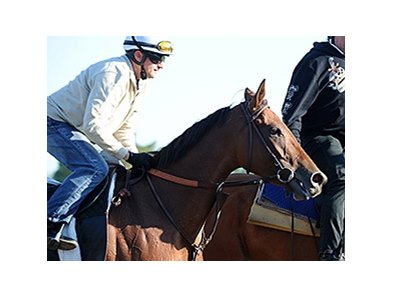 "Beholder <br><a target=""blank"" href=""http://photos.bloodhorse.com/AtTheRaces-1/At-the-Races-2014/i-VNwkrmb"">Order This Photo</a>"