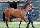 Lot 233, a War Front filly, sold for 270,000 guineas on May 2.