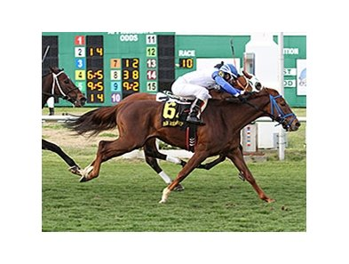 "Potomac River comes on late to nose out Skyring in the Fair Grounds Handicap.<br><a target=""blank"" href=""http://photos.bloodhorse.com/AtTheRaces-1/At-the-Races-2014/35724761_2vdnSX#!i=3088581631&k=W6tSs2B"">Order This Photo</a>"