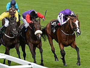 Estimate (center) finished second in this year's Gold Cup (Eng-I) at Royal Ascot.