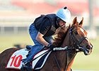 Red Cadeaux Ready to 'Bring It' in Tenno Sho