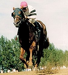 Canadian HOY and Sire Afleet Dies in Japan