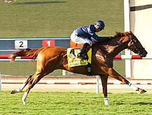 Personal Diary Pens Del Mar Oaks Surprise