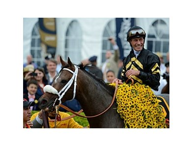 "2013 Preakness Stakes winner Oxbow<br><a target=""blank"" href=""http://photos.bloodhorse.com/TripleCrown/2013-Triple-Crown/Preakness-Stakes-138/29423277_98XmS6#!i=2519783639&k=89TkS2z"">Order This Photo</a>"