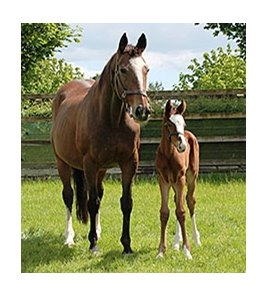 A foal by Galileo out of Mariah's Storm.