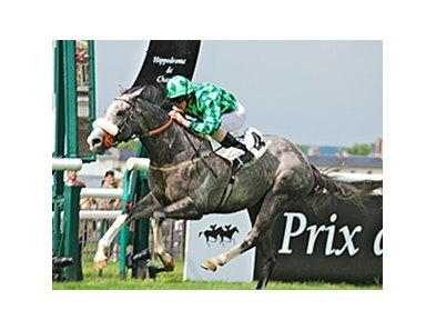 The Grey Gatsby wins the Prix Du Jockey Club.