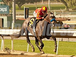 Midnight Hawk comes home strong to win the Sham Stakes.