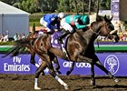 "Zenyatta stays unbeaten with an impressive score in the Breeders' Cup Ladies Classic.<br><a target=""blank"" href=""http://www.bloodhorse.com/horse-racing/photo-store?ref=http%3A%2F%2Fpictopia.com%2Fperl%2Fgal%3Fprovider_id%3D368%26ptp_photo_id%3D6447087%26ref%3Dstory"">Order This Photo</a>"