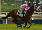 Lexie Lou Adapts to Turf in Wonder Where Win