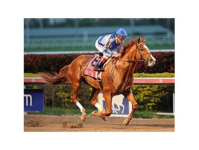 "Lea won the 2014 Donn Handicap. <br><a target=""blank"" href=""http://photos.bloodhorse.com/AtTheRaces-1/At-the-Races-2014/35724761_2vdnSX#!i=3067381095&k=Fp6P7Tm"">Order This Photo</a>"
