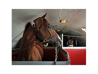 "California Chrome aboard a flight bound for Baltimore on May 12. <br><a target=""blank"" href=""http://photos.bloodhorse.com/TripleCrown/2014-Triple-Crown/Preakness-Stakes-139/i-XkN7JHN/A"">Order This Photo</a>"