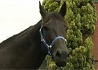 Interview - Peter Moody & Black Caviar