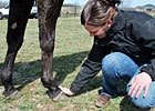 Using Vital Signs to Monitor Racehorses