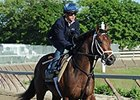Commissioner at Belmont Park.