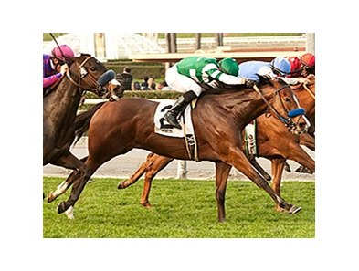Sky High Gal won the Wishing Well Stakes on Feb 9.