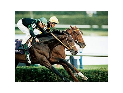 Prized winning the 1989 Breeders' Cup Turf.