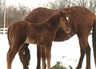 Foal by Encaustic -- Forty Licks, by Lycius.