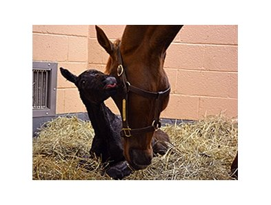 Foal cam at the New Bolton Center