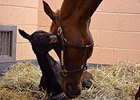 New Bolton Broadcasts Birth Via Foal Cam