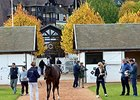 The Arqana October yearling sale.