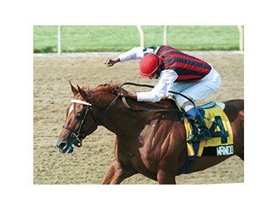 2003 Canadian Horse of the Year Wando