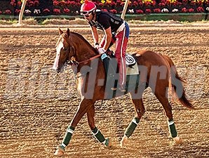 California Chrome made his first trip to the track at Pimlico Race Course the morning of May 13.