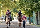 "Magician (left), Eye of The Storm (right), and Adelaide (behind) head back after training Friday morning.<br><a target=""blank"" href=""http://photos.bloodhorse.com/AtTheRaces-1/At-the-Races-2014/i-kHhgPmL"">Order This Photo</a>"