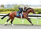 Bobby's Kitten Breezes for Blue Grass