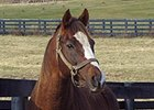 The Name's Jimmy at at Old Friends Thoroughbred Retirement Center in Georgetown, Ky.