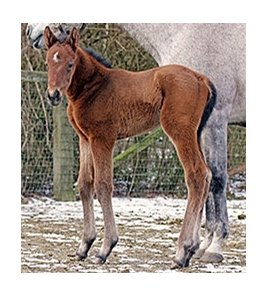 A colt by Atta Boy Roy out of Silver Screen Girl.