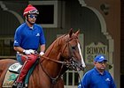 "California Chrome<br><a target=""blank"" href=""http://photos.bloodhorse.com/TripleCrown/2014-Triple-Crown/Belmont-Stakes-146/i-3PffLXd"">Order This Photo</a>"