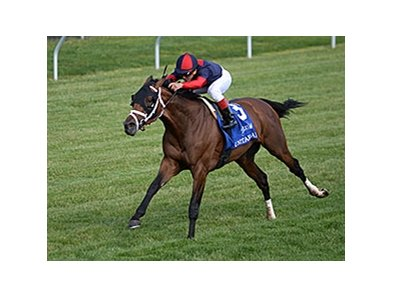 "Unitarian will attempt to become the fourth horse to win the Dixiana Elkhorn in consecutive years.<br><a target=""blank"" href=""http://photos.bloodhorse.com/AtTheRaces-1/At-the-Races-2014/i-K9RVd4W"">Order This Photo</a>"