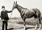 The Great 19th Century Champion Salvator