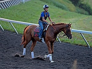 Wise Dan at galloped at Keeneland on July 1, 2014.