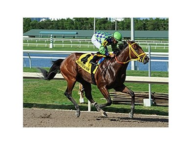 "Wildcat Red cruises to victory in the Quality Road Stakes.<br><a target=""blank"" href=""http://photos.bloodhorse.com/AtTheRaces-1/At-the-Races-2014/i-zt2MSMm"">Order This Photo</a>"