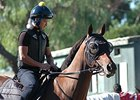 Rich Tapestry preps for the Santa Anita Sprint Championship.
