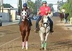 BC 2014: California Chrome Oct 25 Work