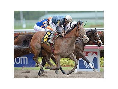 "Rampart Stakes winner Gamay Noir faces 7 in the Obeah.<br><a target=""blank"" href=""http://photos.bloodhorse.com/AtTheRaces-1/At-the-Races-2014/35724761_2vdnSX#!i=3155827374&k=DqP33jz"">Order This Photo</a>"