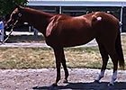 Fasig-Tipton Kentucky: Hip 414 Bedford Land