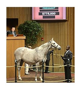 Ponche de Leona, dam of 2013 Breeders' Cup Classic (gr. I) winner Mucho Macho Man, brought $775,000 as the high point Tuesday at the sale in Lexington.
