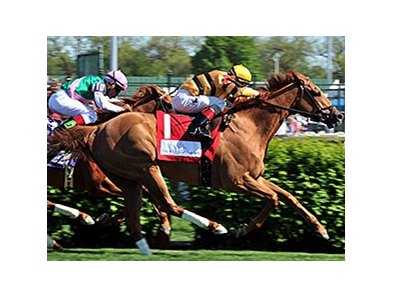 "Wise Dan<br><a target=""blank"" href=""http://photos.bloodhorse.com/AtTheRaces-1/At-the-Races-2014/i-9TkSdrC"">Order This Photo</a>"