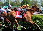 Wise Dan Won't Run in Fourstardave