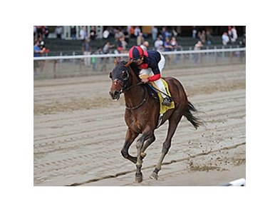 Tonalist winning the Peter Pan Stakes.