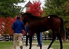 F-T October Yearling Sale Recap Day 2