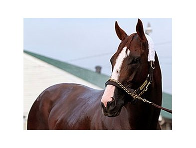"California Chrome is due to return to his Los Alamitos stable July 17.<br><a target=""blank"" href=""http://photos.bloodhorse.com/TripleCrown/2014-Triple-Crown/Kentucky-Derby-Workouts/i-BvpM5q2"">Order This Photo</a>"