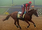 California Chrome on the morning of May 15.