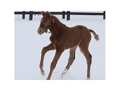 First foal by Santiva, a filly out of Bear All.