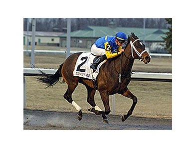 Solitary Ranger is in control in the John Battaglia Memorial Stakes at Turfway Park.